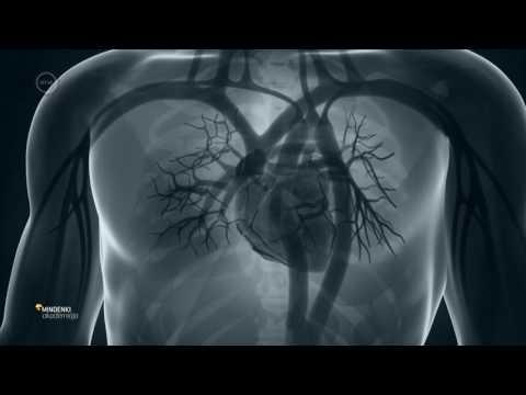 Magas vérnyomás hogyan kell kezelni az étrendet