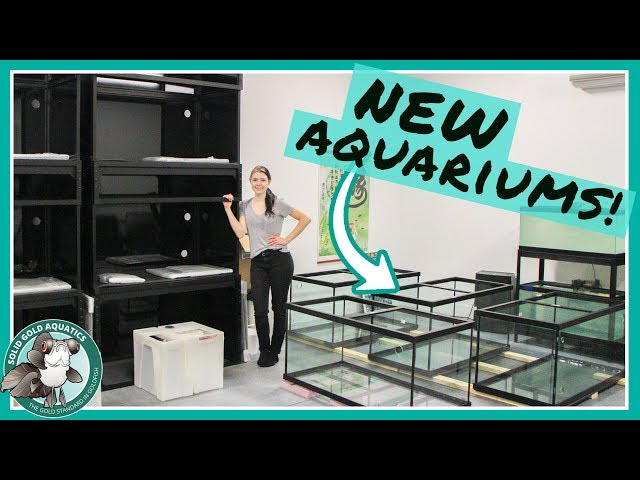 NEW AQUARIUMS ARE HERE! // VLOGMAS DAY 5