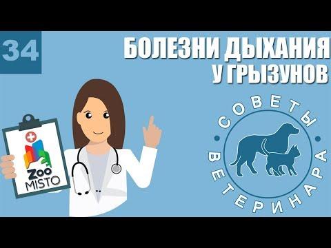 Болезни органов дыхания у грызунов | Симптомы болезней | Профилактика болезней | Советы Ветеринара