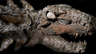 10 Most AMAZING Fossil Discoveries Ever Made!