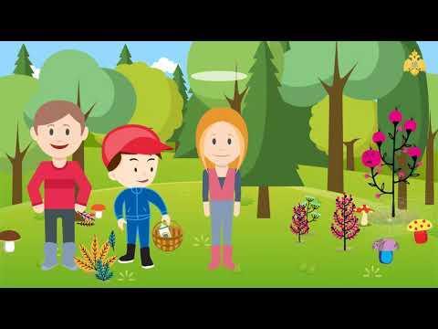 Правила безопасного поведения в лесу