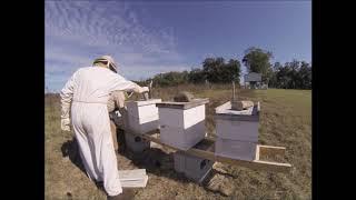 Working Florida Bees