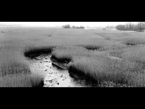 The Mud - Quinnipiac River Marsh - New Haven / North Haven / Hamden border (Drone: 25fps)