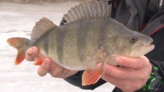 Передача про зимнею рыбалку