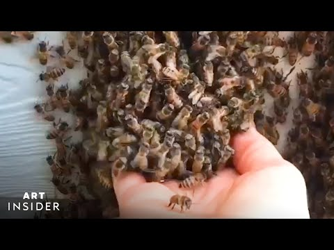 , title : 'How A Professional Beekeeper Removes Hives From Homes