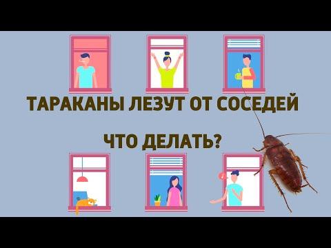 Тараканы лезут от соседей, что делать?