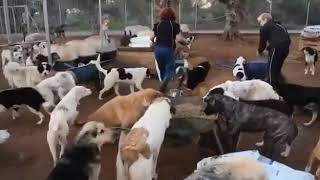 One of the biggest rescue dog shelters in Greece