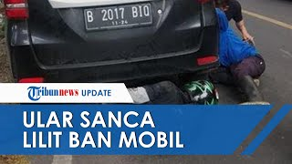 POPULER: Ular Sanca Sepanjang 3 Meter Lilit Ban Mobil Bikin Macet di Jalan Raya Jayanti Sukabumi