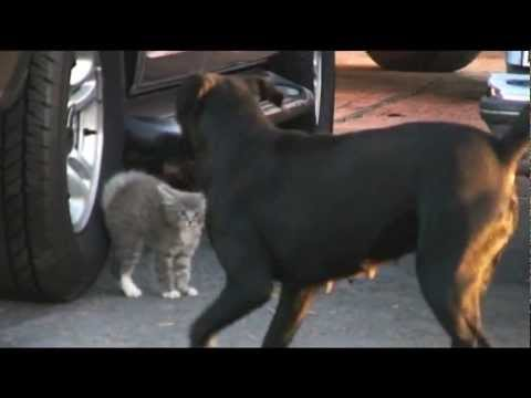 Dogs surround kitten, mama comes to rescue