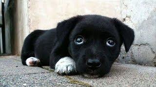 Семья думала, что купила щенка. Но когда малыш подрос, всем стало ясно кто это