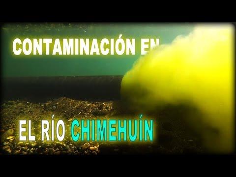DESOVE DE TRUCHAS EN LA BOCA DEL CHIMEHUÍN---y algo más.