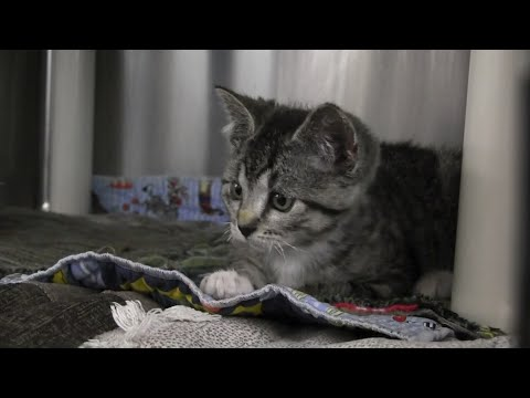 A kitten that was encased in hardened spray foam is expected to make a full recovery after being rescued from a garbage can by an Oregon sanitation worker. (May 16)