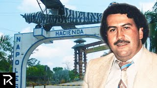 Pablo Escobar Owned More Than 200 Exotic Animals
