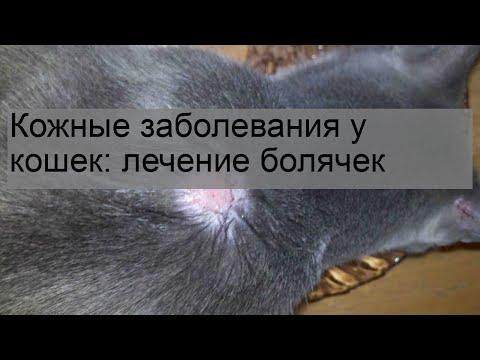 Кожные заболевания у кошек: лечение болячек
