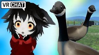BABY WOLF BOI VICIOUSLY ATTACKED BY GEESE - VRCHAT
