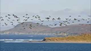 Isle Of Islay (Donovan Cover)