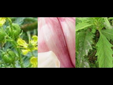 Tabletták férgek paraziták számára