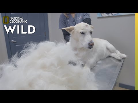 A Dog With Out of Control Shedding | Heartland Docs, DVM