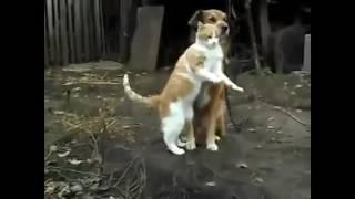 Собаки это что - то!!!