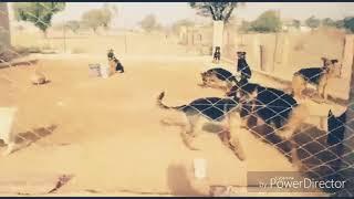 My dog farm video ( bhinder dog breeding centre )