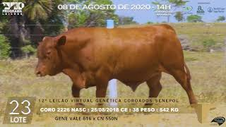 Coro 2226 b4 fiv