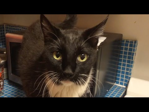 Amazing Cat You Won't Believe What He Does – Parry Gripp