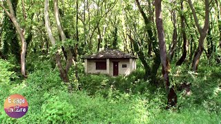 A small house in the woods # Relaxing sounds of birds, crickets, waters # Relax, stress relief.