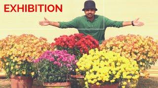 My Plants In Exhibition, Chrysanthemum, Impatiens, Petunia, Tamarind Bonsai, Part 9