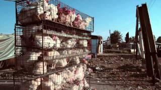 """Cassper Nyovest ft. OkMalumKoolKat """"Gusheshe"""""""