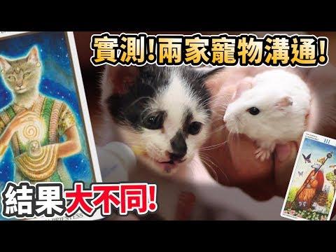 寵物溝通師真的準嗎,小捷運希望小貓留下嗎