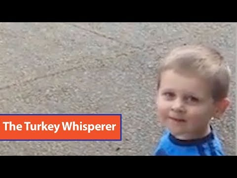 Little Boy Talks to Turkeys