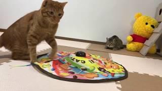 猫と遊びます!