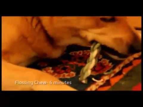 Video Ruptur des Kreuzbandes Knie