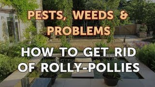How to Get Rid of Rolly-Pollies