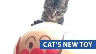 animale pisica comica
