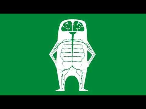 Kürbiskerne in der Behandlung von Prostatakrebs