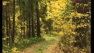 Смотреть онлайн Правила выживания в лесу