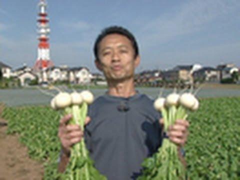 私のとれたて日本一! (12)白いカブは 根じゃないの?