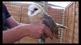 how to train a owl