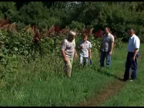 Фермеры Большеглушицкого района сделали ставку на бахчевые культуры