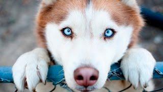 Смотреть онлайн Почему собаку называют преданным другом