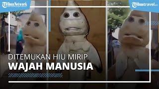 Heboh, Ditemukan Hiu Mirip Wajah Manusia di NTT, BKKPN Ungkap Fakta Mengejutkan