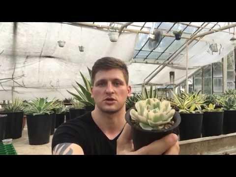 Секреты выращивания суккулентов