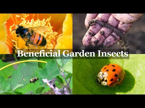 , title : 'Beneficial Insects You Want in your Garden - The Gardener's Best Friends!