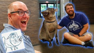 Meeting a Warthog with Pumbaa's Animator! (Plus More Animals) Ft. Tony Bancroft