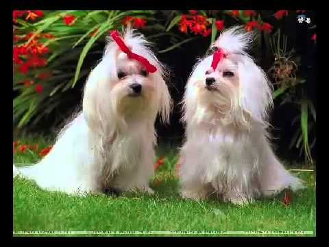 Video How To Cure Kennel Cough