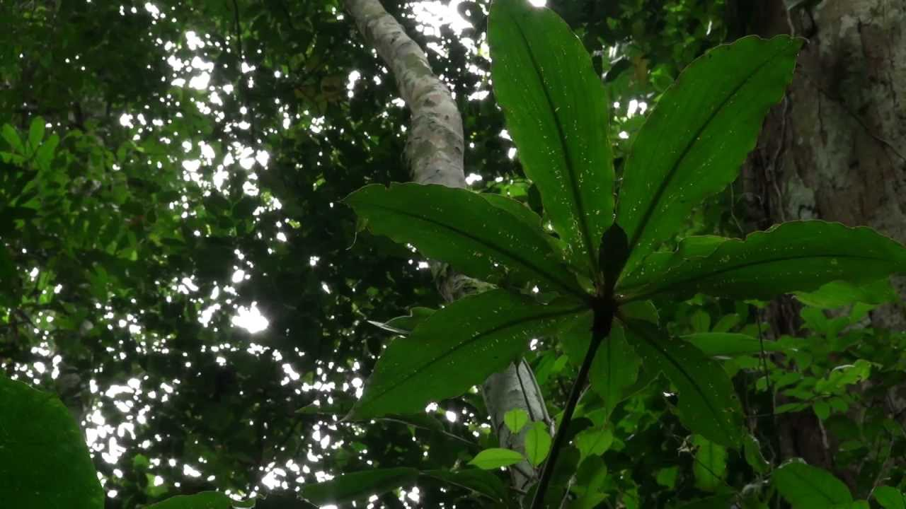 Le Bassin du Congo: L'Etat des Forêts (CIFOR)