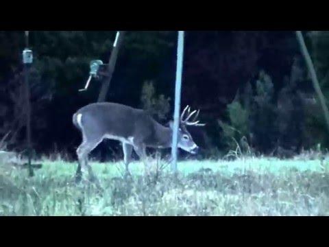 8pt Buck Hunt 2015 Sisco D Ranch