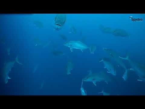 La pesca su lancio lontano di video