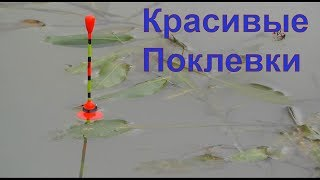 Разновидности поплавков для летний рыбалки